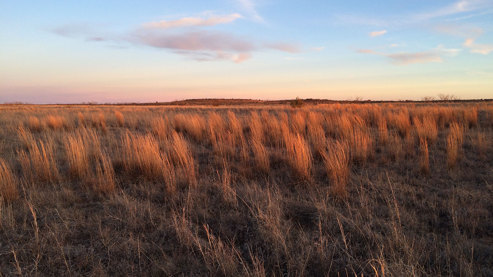 Maddin Prairie