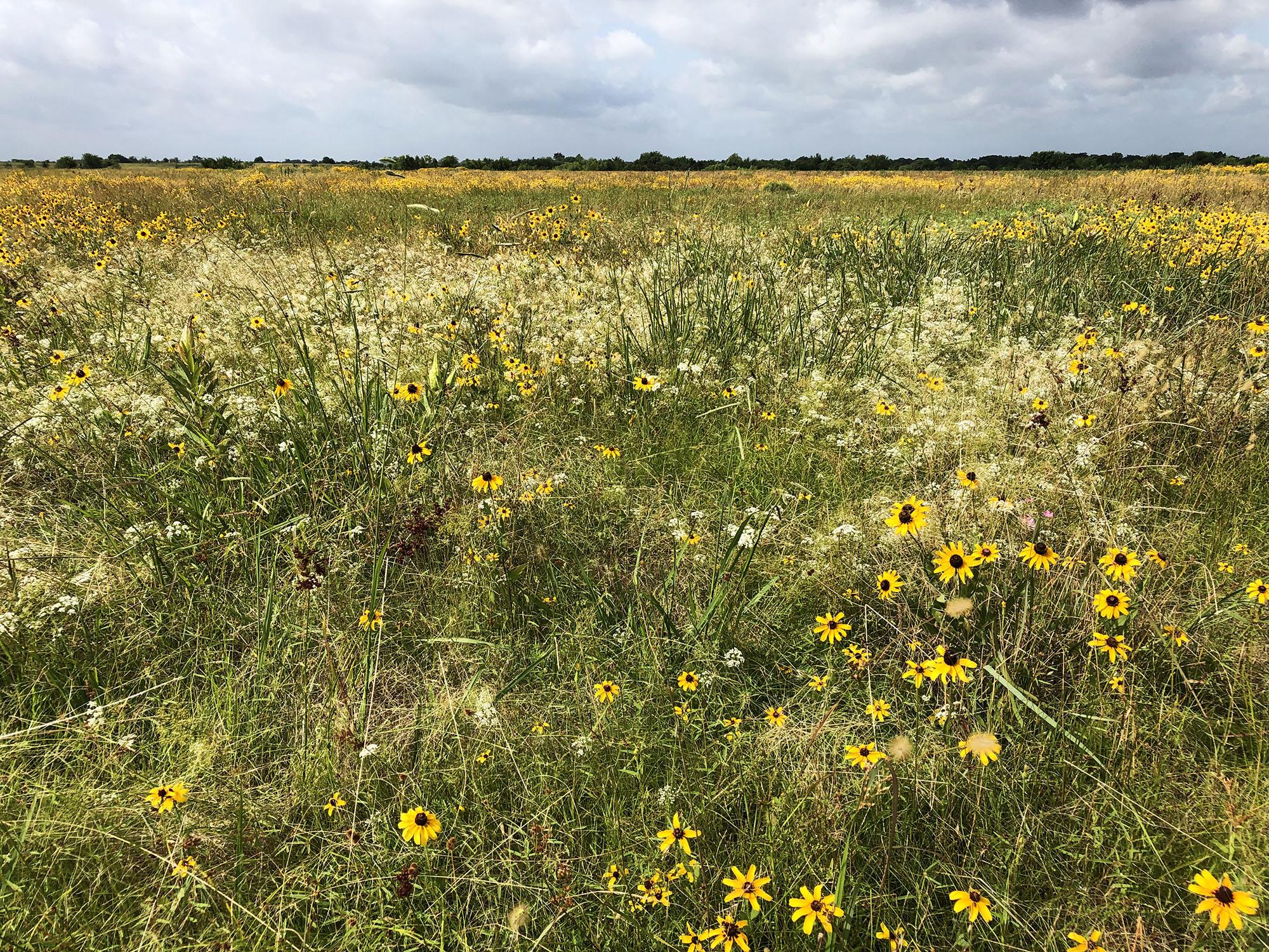 Daphne Prairie in June