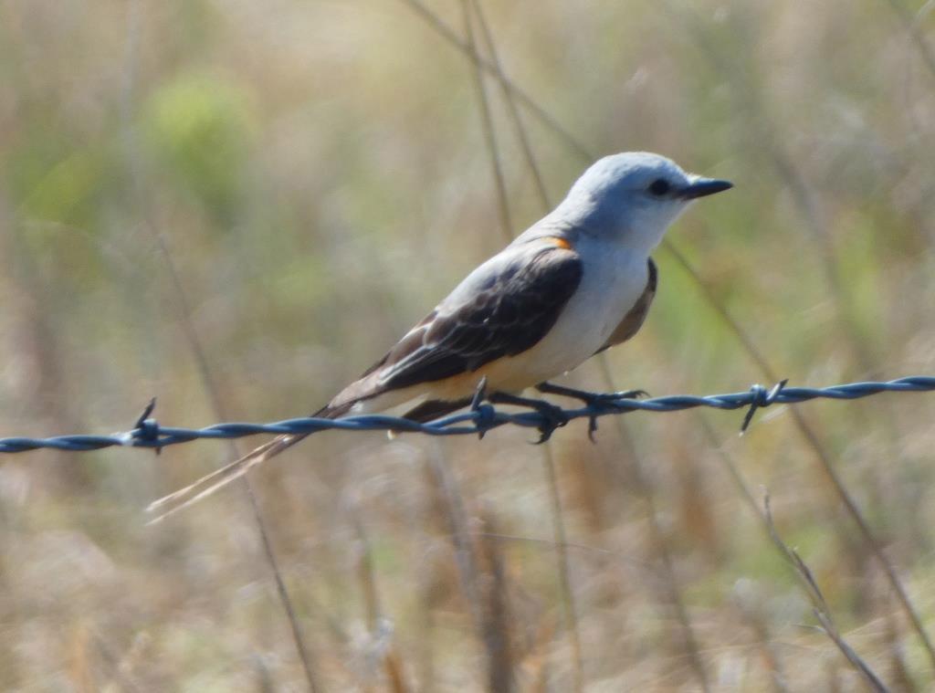 The Prairie Bird-a-thon