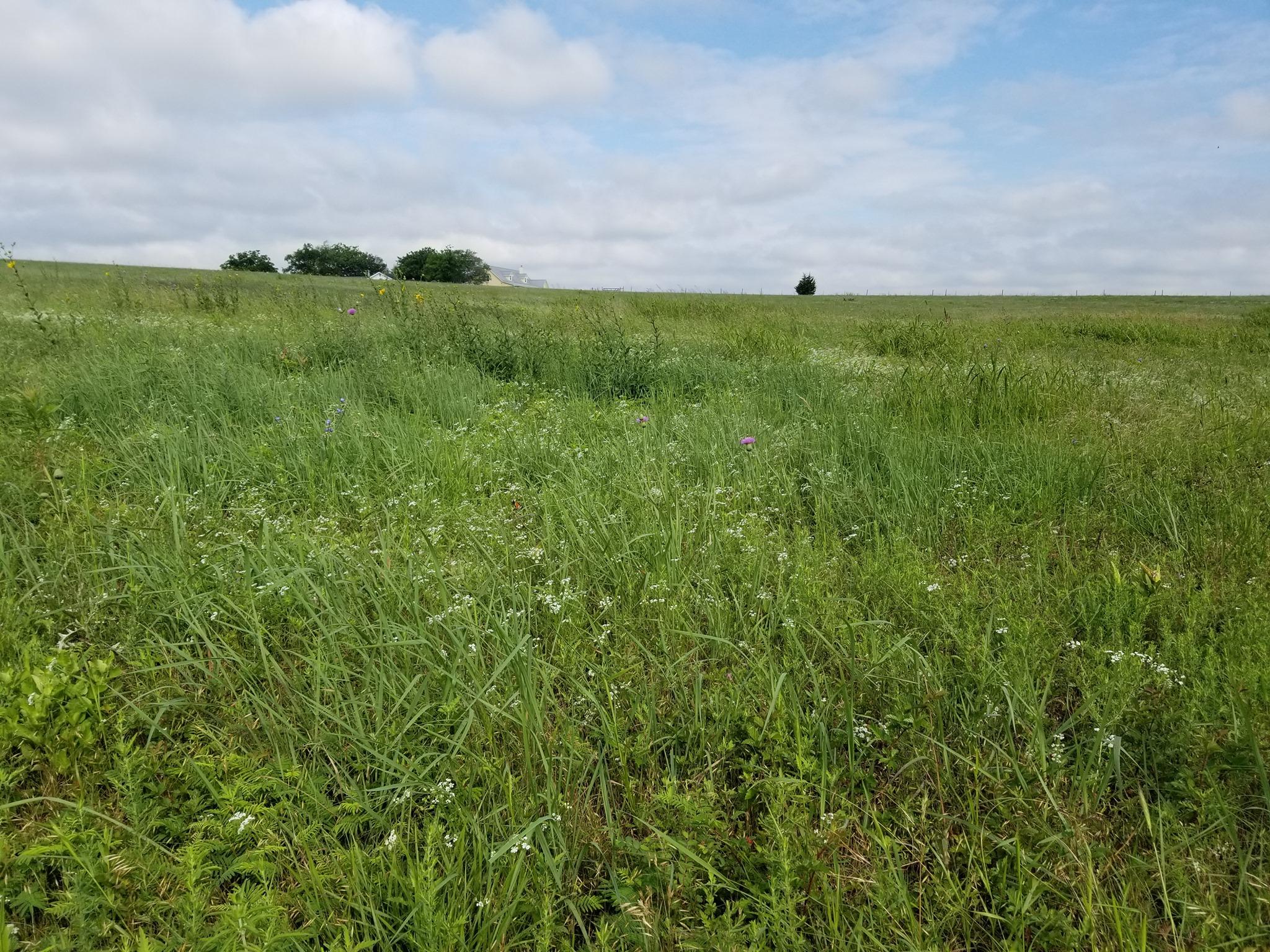 Quebe Prairie diversity