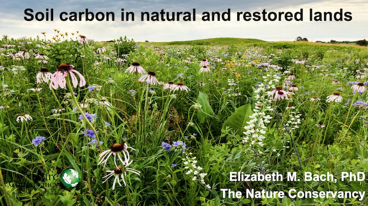 Soil Carbon in Natural and Restored Lands, Elizabeth Bach